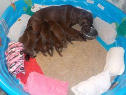 Hope eats in bed and feeds pups too