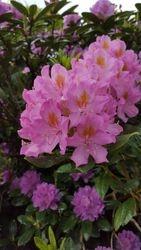 Chalet Bloom