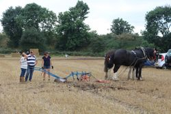 Horse ploughing