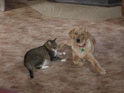 Izzie and her feline friend