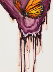 "Monarch butterfly displaying it's magnificent ""purple aura""."