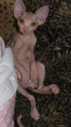 Dobbie's first litter - 2008