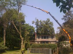 long reach tree removal
