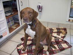 Cocoa, Pet ER's resident canine