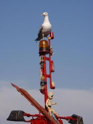 A seagul waits on the boat for any leftovers!