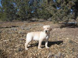 Buddy at 7 weeks