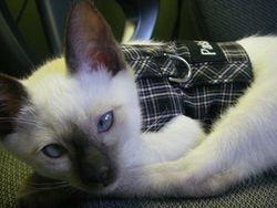 Hello, aren't I just the cutest kitten!!!