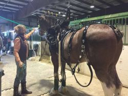 Around the horsebarn