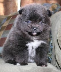 Blue with white markings