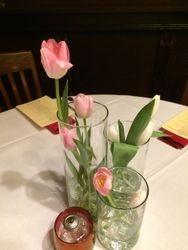 Tulip Triumph