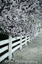County Fence
