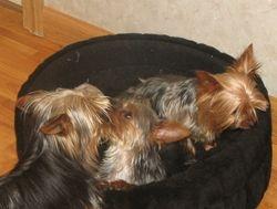 Luci Lu, Tucker and Little Girl
