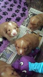 Pups at 27 days