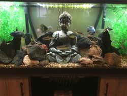 Customer Heath and his amazing aquascape