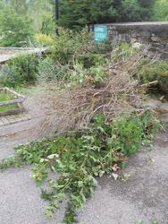 tree and weeds removed from parking area