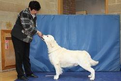 Class 1 Veteran Dog and Best Veteran in Show