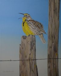 "Signs of Spring - Western Meadowlark (16 by 20"" acrylic on canvas) In Private Collection"