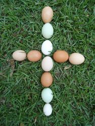 Egg Cross
