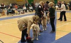 Post Graduate Dog Lineup