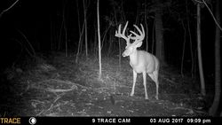 Trail Cam Aug 3, 2017