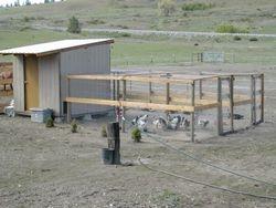 Original 8' x  8' coop, spring 2006