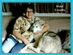 Woluf 5 month