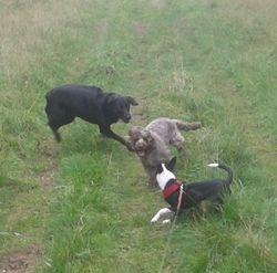 Playing with Benji & Pip