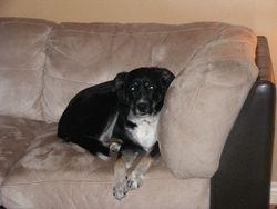 Bailey(1st visit)