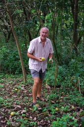 Collecting mangoes in Annette's garden