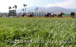 Drought Resistant Turf Course