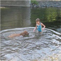 swimming ridgeback