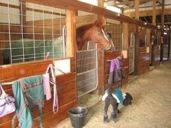 Stalls in unattached barn