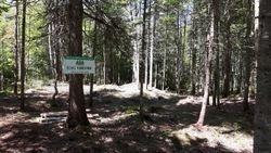 Nettoyage En Forêt