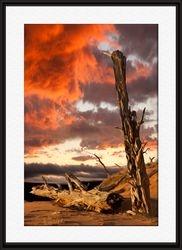Tree at Sand Dunes