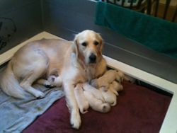 Stella and 8 babies