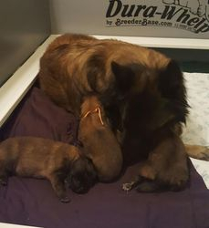 momma and pups 9 days old