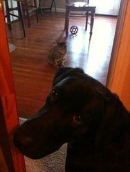 """I'm not kidding...the cat won't let me get to my ball!"""