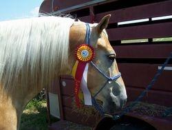 Reserve Champion - Horse Trials