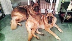 Tyson and Oscar