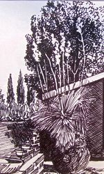 Yucca in the Courtyard