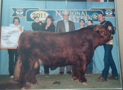 2011 Reserve Grand Champion Norman