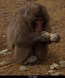rub together (Arashiyama)