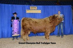 Trafalgar Yann, Grand Champion Bull