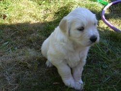 Sophie 5 weeks