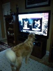 raylin watching tv