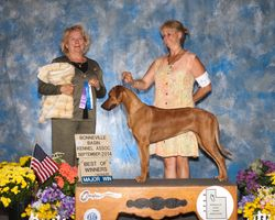 GCh Askher 5 point major BOW Farmington Utah