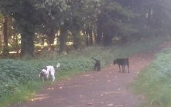 Me, Lily and Pip at the forest