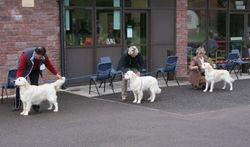 Puppy Dog Entry