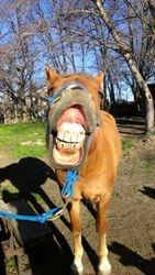 One Trick Pony!