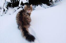 i snøen for første gang